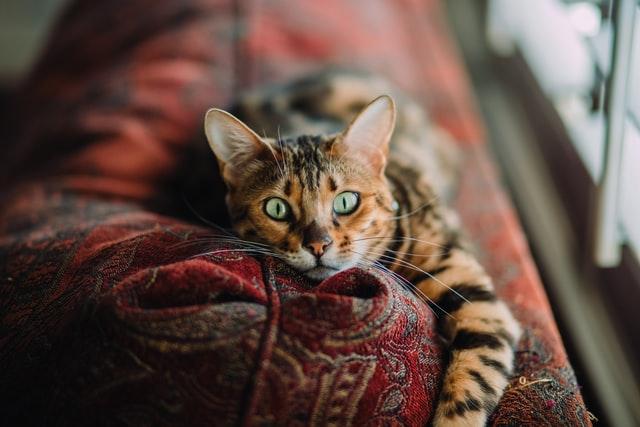 Zijn kattenluiken handig?