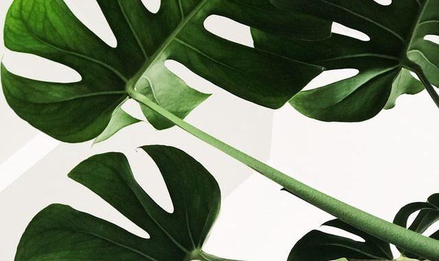 Waarom planten binnen een must zijn